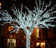 Ağaç ışık süsleme yılbaşı için ağaçlara süsleme ve dekorasyon süslemeleri ışık süslemesi yapmaktayız.
